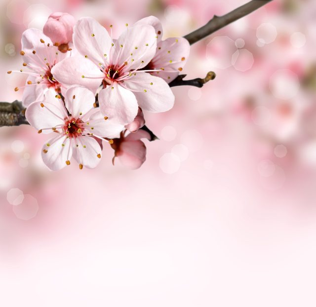 background-bloom-blossom-76997